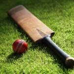 cricket on green grass