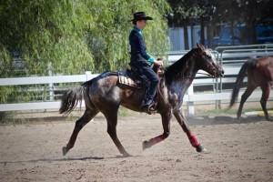 Equestrian4